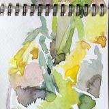 Daffodils-March-2020