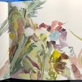 Flowers-Queen-Annes-Lace-Nub-8-22-20