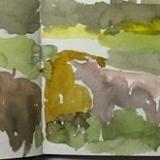 Scottish-Highland-cattle-6-2-16-5.5-x-16-.50