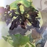Seaweed-2-2020