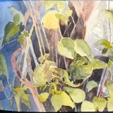flowers-Clemetis-Dixie-Wilder-8-20-20