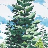 Blue-SpruceGSHI